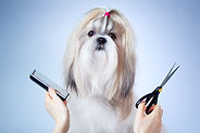 low cost mobile dog groomer riverview, brandon, lithia & valrico