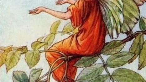 """Pflanzen in der indigenen Kosmovison (FB: """"Wesen der Pflanzen"""")"""