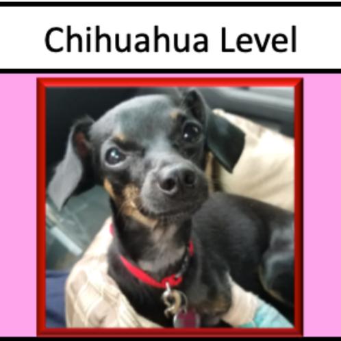 Chihuahua Level Sponsorship