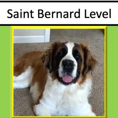 Saint Bernard Level Sponsorship