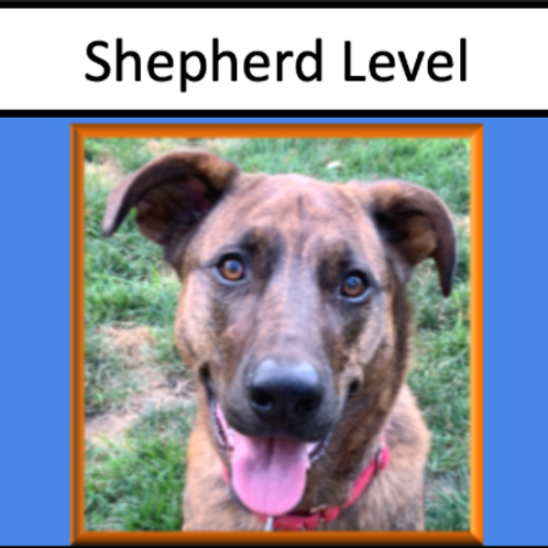 Shepherd Level Sponsorship