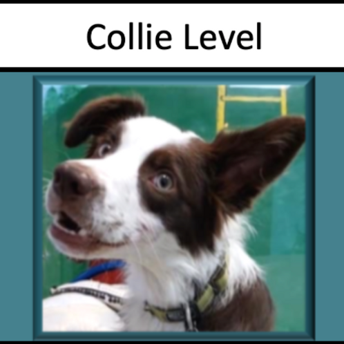 Collie Level Sponsorship
