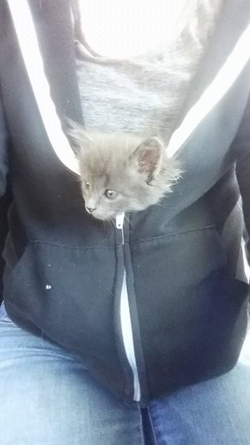 stuff a kitty in your coat