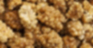 izmir organic dried mulberries.jpg
