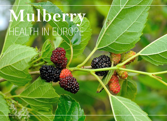 Strong demand for mulberries because of a changing perception of health in Europe