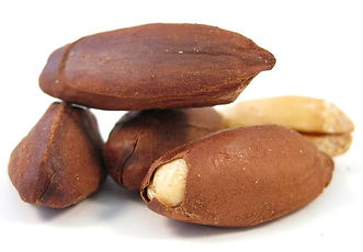 Food Export Group is one of the wholesaler of Pili Nuts. Our wholesale Pili nuts are coming from our Polynesian cooperative.