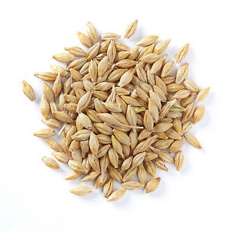 Food Export Group do supply Barley grains in their whole, flakes and Flour forms. If you are in need wholesale Barley grains, you can get in contact with us easily.