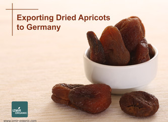 Exporting Dried Apricots to Germany