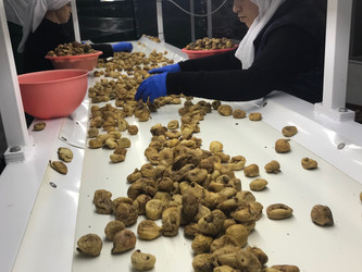 Dried Fig production hit a record