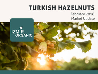 Turkish Hazelnuts February Market Update