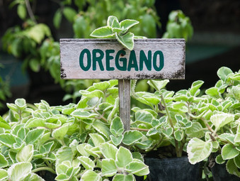 Marjoram or is it Oregano ?