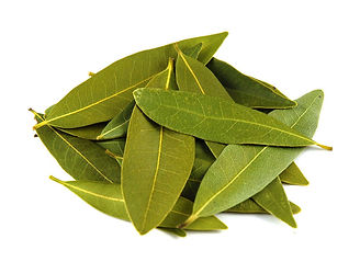 Food Export Group supplies laurel leaves which has wide usage area from culinary to alternative medicine.