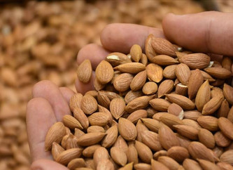 17.6 Million USD revenue from Apricot Seeds