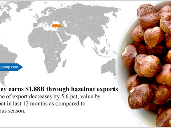 Turkey earns $1.88B through hazelnut exports