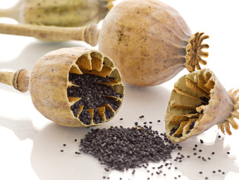 Poppy Seeds; Usage Tips, Benefits and a Recipe