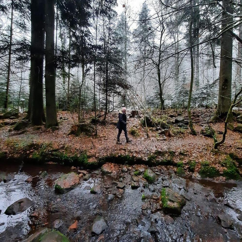 Tι είναι το γιαπωνέζικο Shinrin-Yoku  Wald της Ελβετίας
