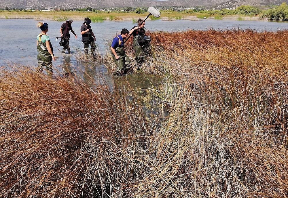 Στιγμιότυπο από τα γυρίσματα με τον ερευνητή Σταμάτη Ζόγκαρη στον υδροβιότοπο του Σχινιά | fb page Πράσινες Ιστορίες