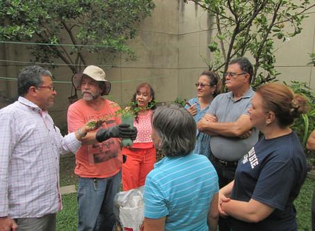 El auge de las Ecohuertas en Medellín