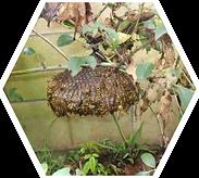 ハチタイトル アシナガバチ.png