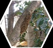 ハチタイトル ミツバチ.png