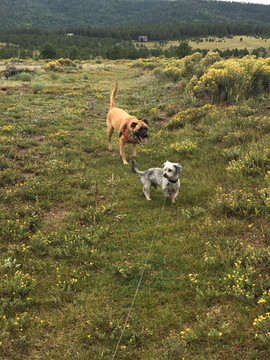 Dog Friendly - Wicket and Kaylee