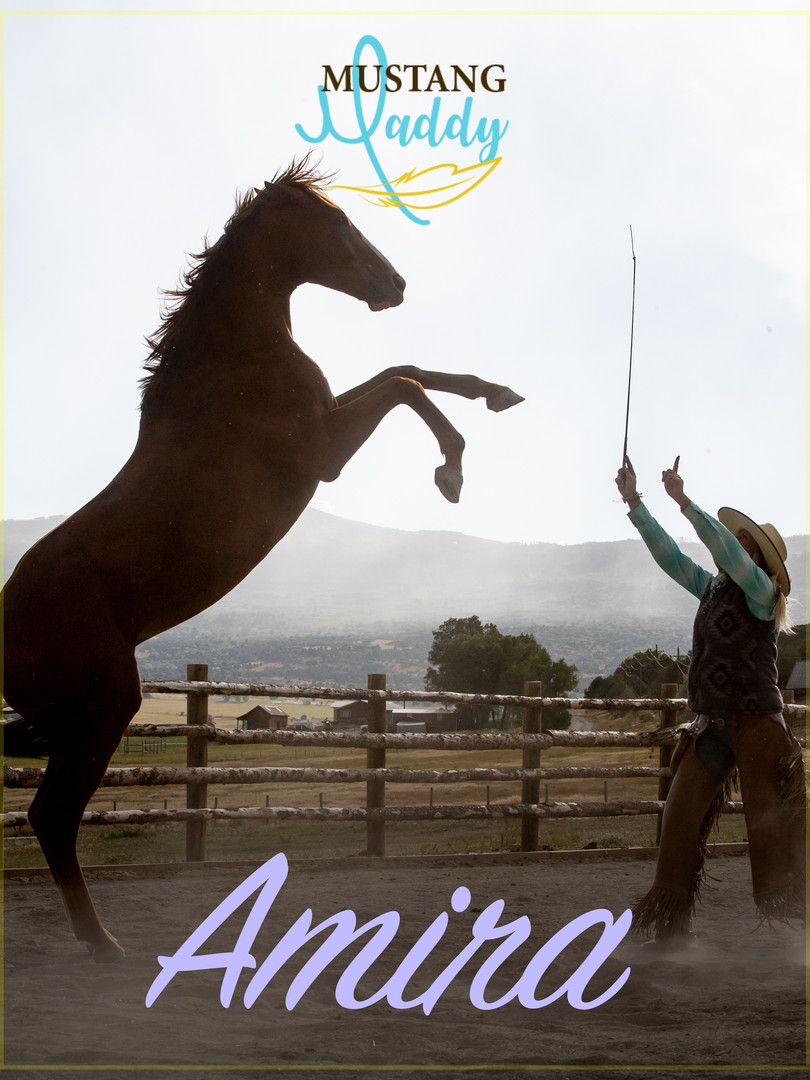Mustang Maddy - Amira