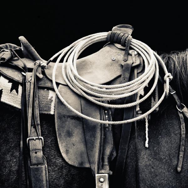 backhorse.png