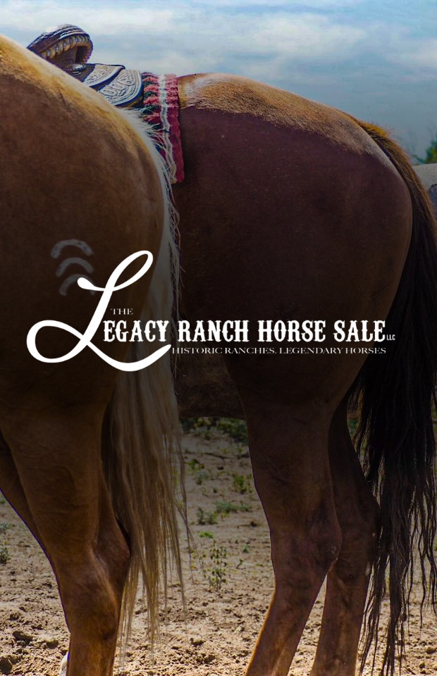 The Legacy Ranch Horse Sale