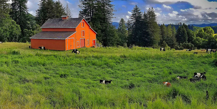 Chuck Clark BARN AND COWS 10x20  1.jpg