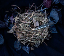 5 - Nest Feather - Susan Friedman