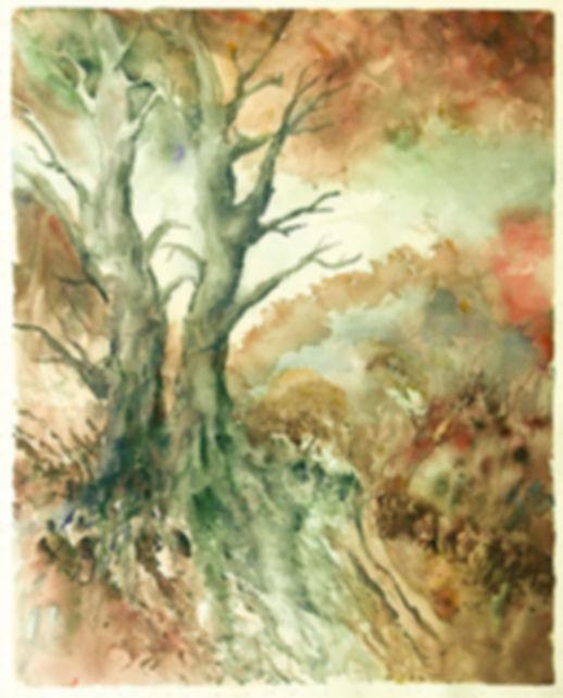 Lorraine Vallero Trees In Red Scrubland