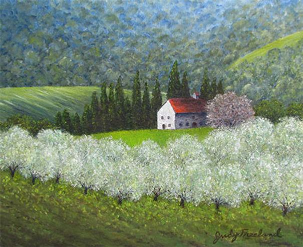Olive-Trees-in-Panzano - Judy Freeland.j