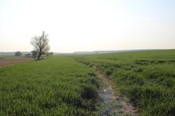 Feldweg bei Kirch Kogel