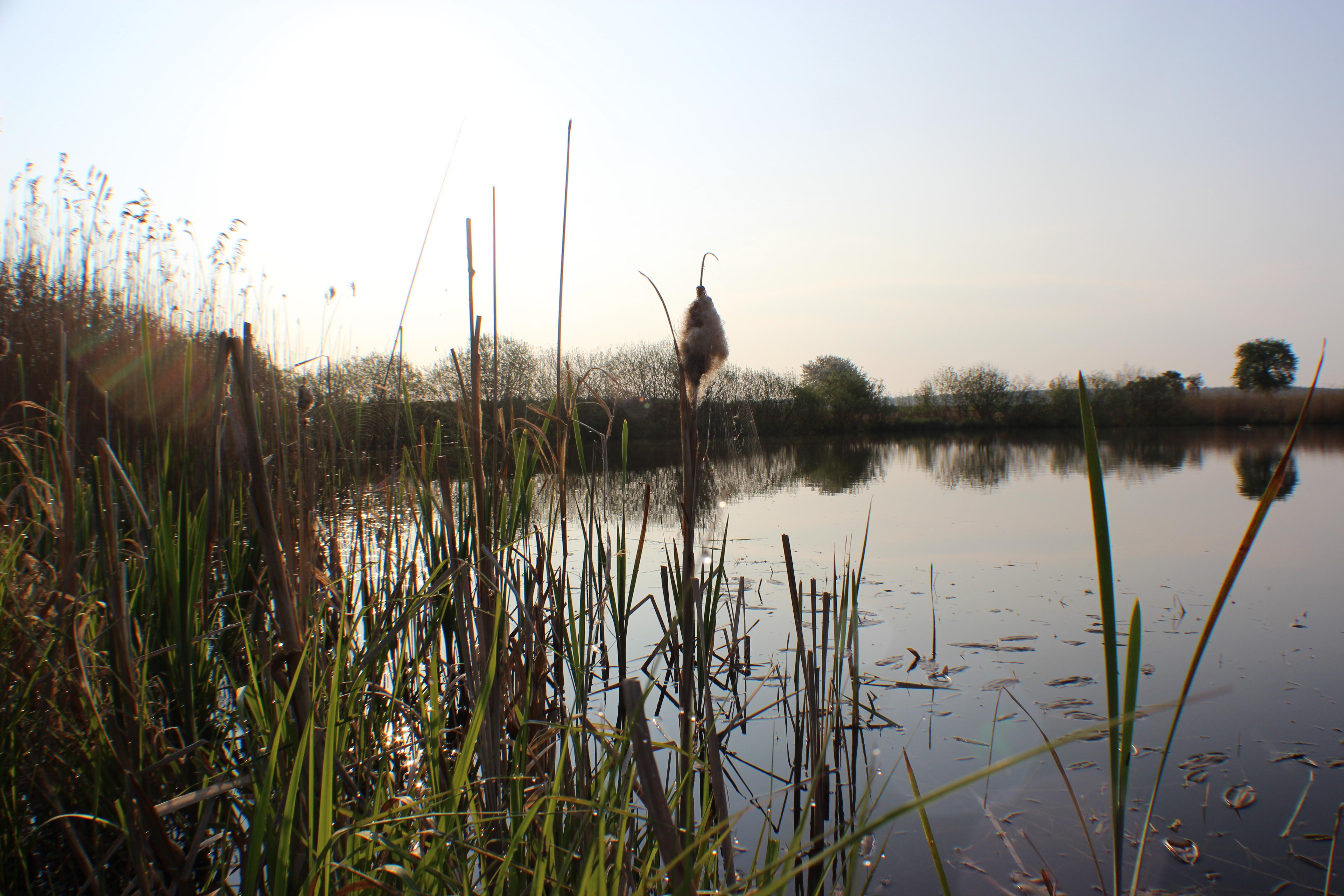 Teich bei Kirch Kogel