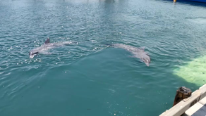 Bali Day 2 - Dolphin Interaction
