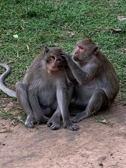 Monkeys in Angkor