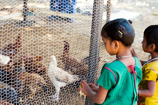 Sebs Trust Jawadi Hills Livelihood Southern India NGO