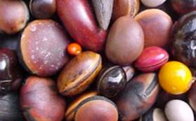 Caribeann Drift Seeds
