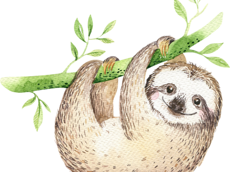 Sloths & Mindfulness