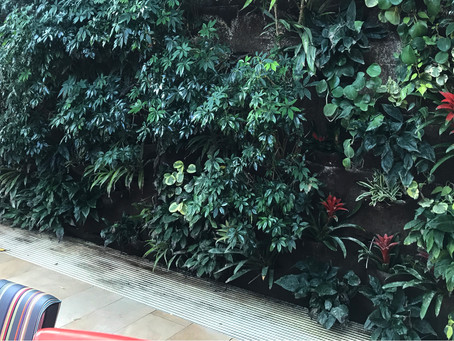 Bring Green Life Into Your Home With a Living Wall for Earth Day