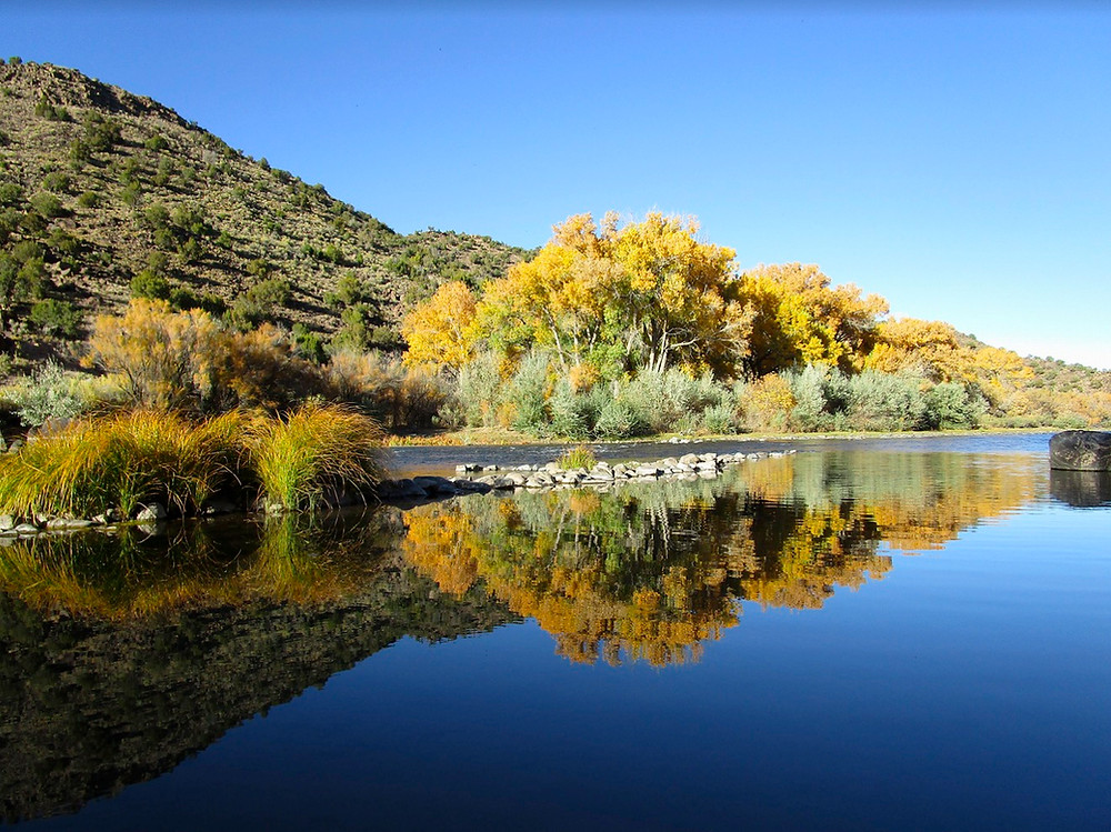 Rio Grande river reflecting the sky and foliage of Cottonwood trees in autumn