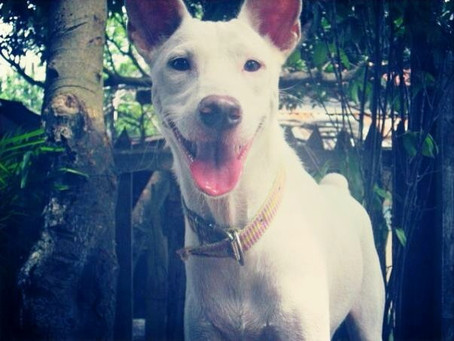 In Memory of Powder, an Exceptional Pooch