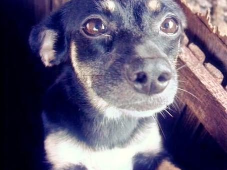 The Dog That Was Ebony