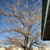 Small tree before.jpg