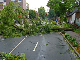 storm damage, fell tree, fallen, storm, broken, tree