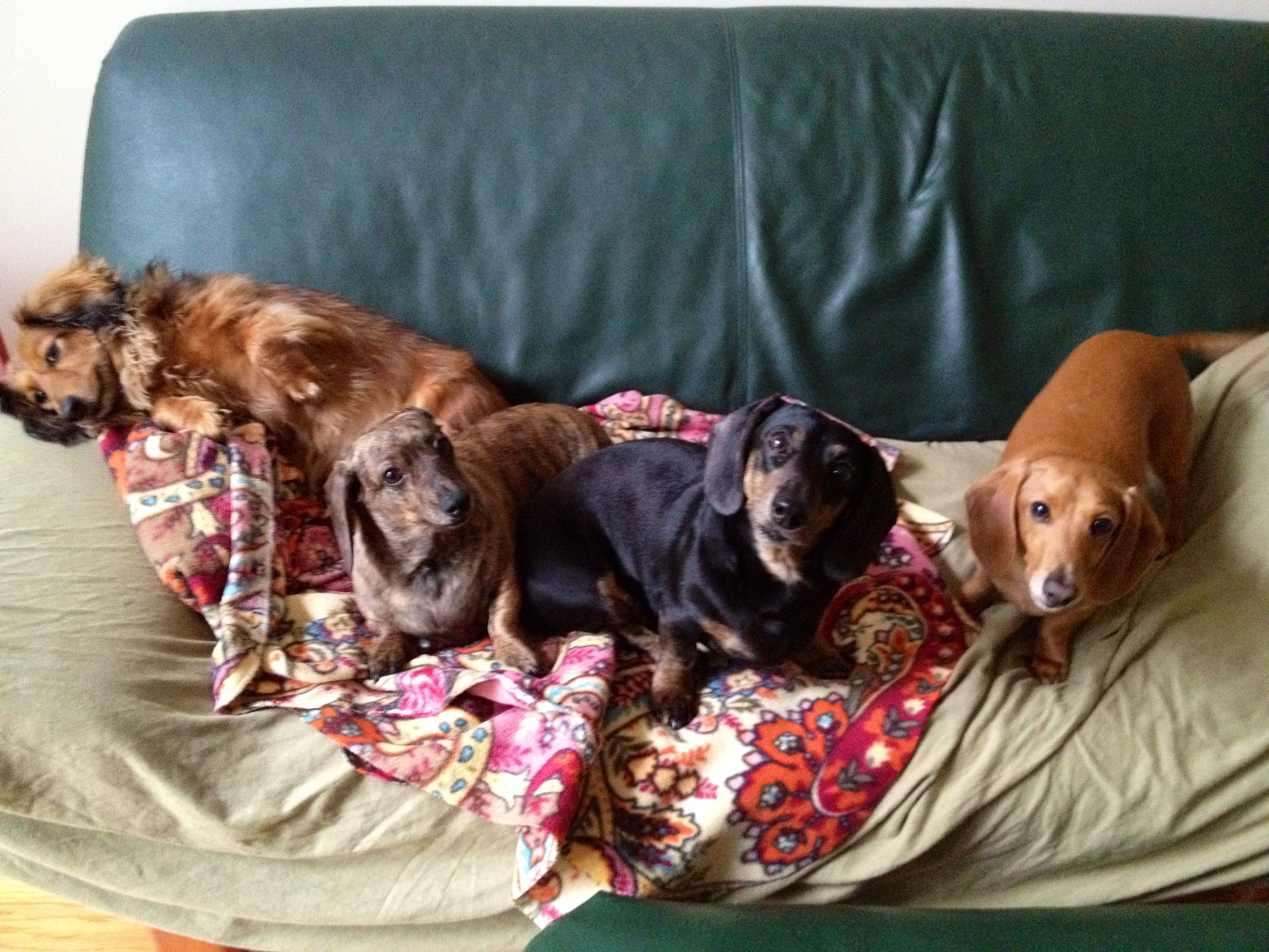 Roxanne, Izzy, Harley and Otis