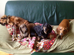 Roxanne, Izzy, Harley and Otis