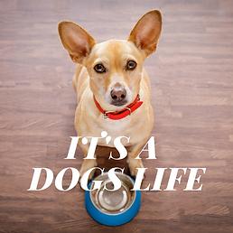 Dog's Life.png