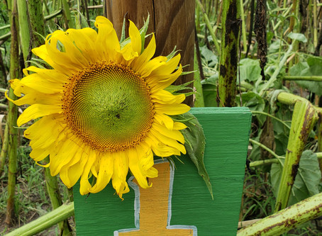 Follow The Sunflower: Part One - The Journey Begins