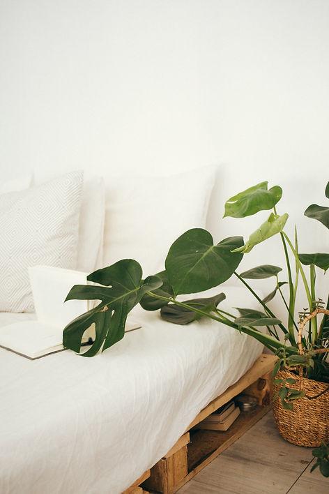 green-leaf-plant-in-brown-pot-inside-roo
